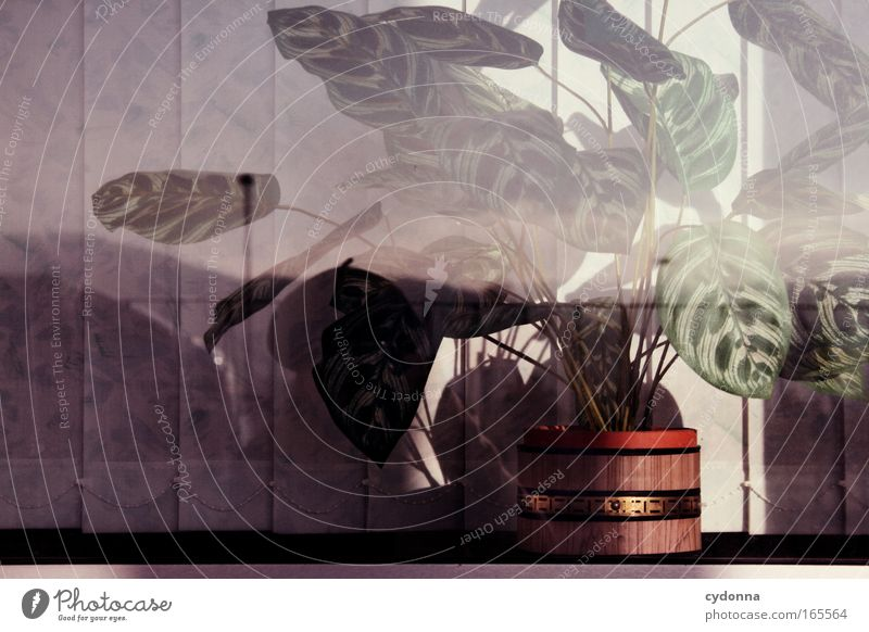 DDR-Design Farbfoto Nahaufnahme Detailaufnahme Menschenleer Textfreiraum links Textfreiraum oben Tag Sonnenlicht Zentralperspektive Pflanze Grünpflanze