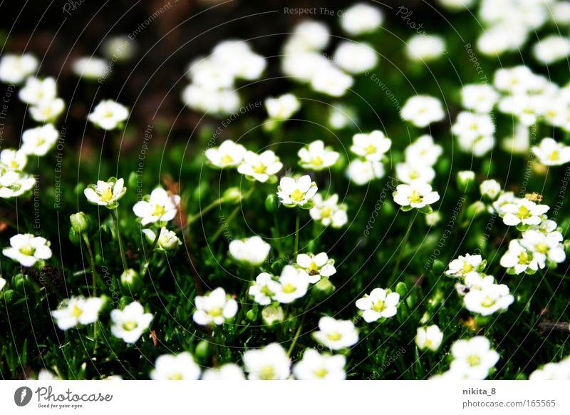 Floret Natur schön weiß Blume grün Pflanze gelb Wiese Blüte Frühling Blühend Duft Schönes Wetter Frühlingsgefühle