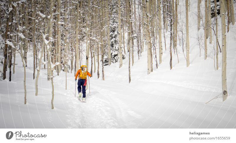 Mensch Natur Ferien & Urlaub & Reisen blau weiß Baum Landschaft Winter Wald Berge u. Gebirge Erwachsene Schnee Sport Aktion Abenteuer Klettern