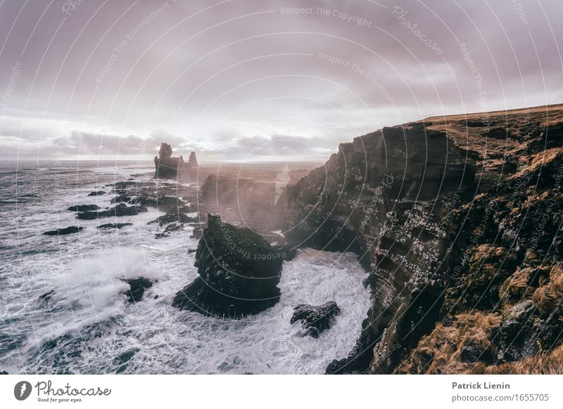 Snæfellsnes Himmel Natur Ferien & Urlaub & Reisen Farbe schön Meer Landschaft Wolken Tier Strand Berge u. Gebirge Umwelt Leben Küste Erde Vogel