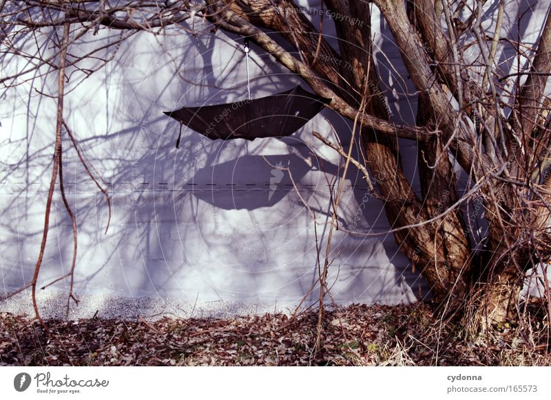 Regenfänger Farbfoto Außenaufnahme Menschenleer Textfreiraum links Textfreiraum unten Tag Schatten Sonnenlicht Zentralperspektive Baum Mauer Wand Zeichen
