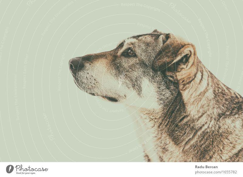 Obdachloser Hund, der oben Portrait schaut Natur Einsamkeit Tier Traurigkeit Gefühle natürlich Wildtier Armut beobachten Freundlichkeit Neugier Hoffnung