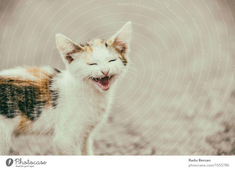 Katze Natur weiß Tier Freude Tierjunges Umwelt Gefühle lustig lachen klein Glück orange Wildtier Fröhlichkeit Lächeln