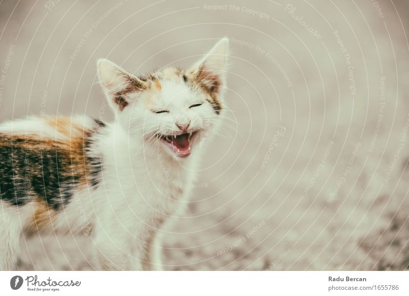 Nette Katze, die mit einem lustigen lachenden Gesicht miaut Natur weiß Tier Freude Tierjunges Umwelt Gefühle klein Glück orange Wildtier Fröhlichkeit Lächeln