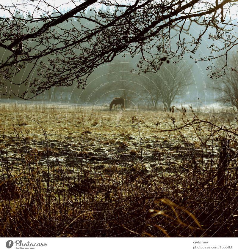 Neighbourhood Natur schön Winter Einsamkeit Tier Ferne Leben Wiese Gefühle Freiheit Glück träumen Traurigkeit Landschaft Eis Stimmung