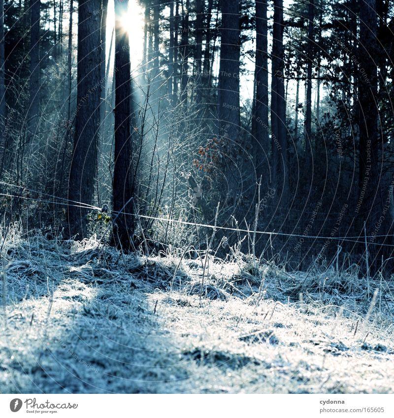 Lichtblick Natur Baum Winter Wald Erholung kalt Leben Wiese Schnee Freiheit Gefühle Umwelt Glück träumen Traurigkeit Eis