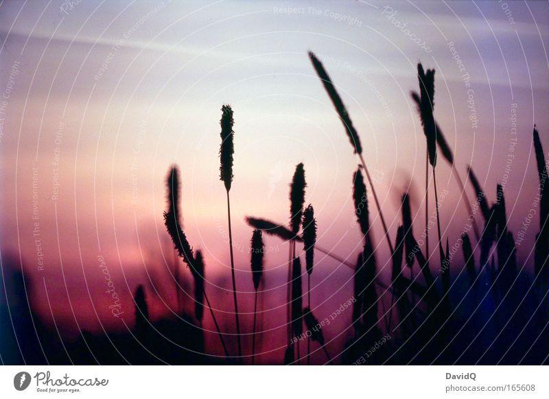 another sunday afternoon Farbfoto Außenaufnahme Abend Dämmerung Licht Silhouette Sonnenlicht Sonnenaufgang Sonnenuntergang Gegenlicht Natur Landschaft Pflanze