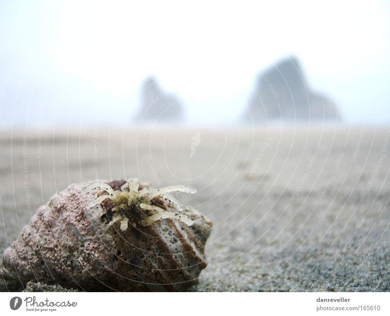 Warum parkst Du so weit weg Schatz? Natur Himmel Meer blau Pflanze Sommer Strand Ferne Leben Blüte Sand Landschaft Küste Felsen Erde frisch