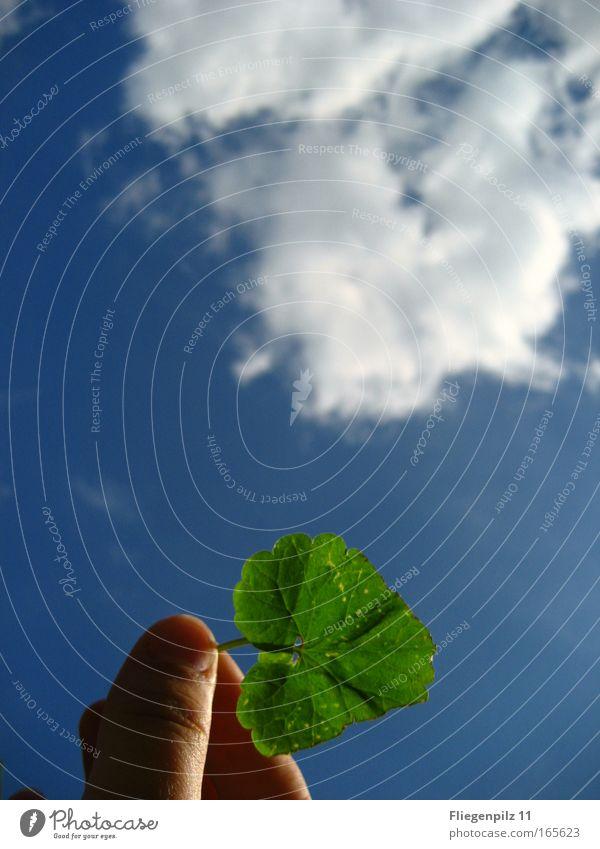 Himmelsblatt Himmel Hand Natur blau grün Pflanze Blatt Wolken Farbe oben Luft hell Umwelt Finger Hoffnung Zukunft