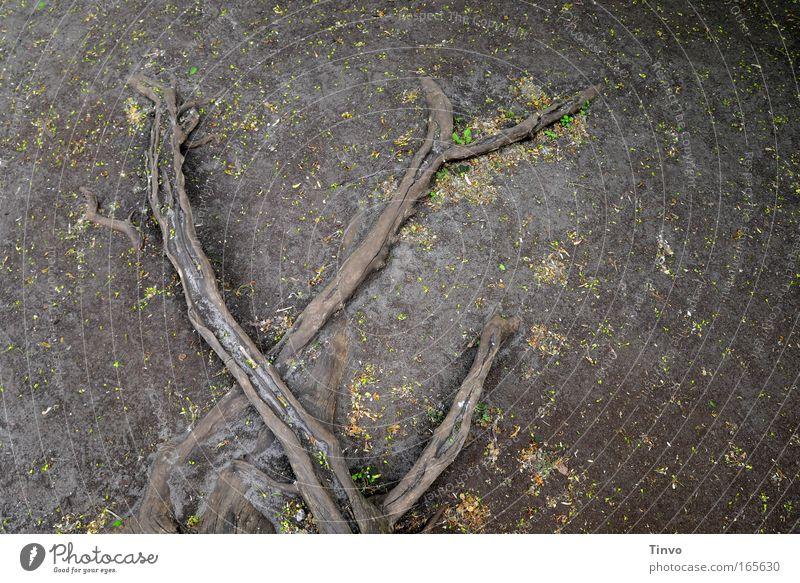 six feet under Natur Einsamkeit dunkel Tod grau Traurigkeit Erde Trauer Vergänglichkeit dünn gruselig Vergangenheit Verfall Zukunftsangst Verzweiflung Ekel