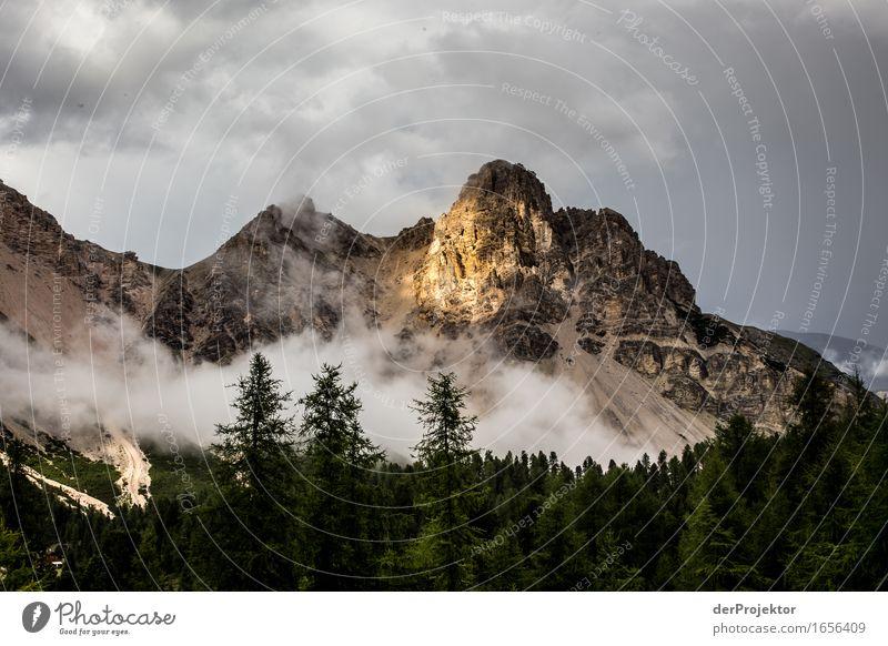 Bisschen Sonne und Hoffnung Natur Ferien & Urlaub & Reisen Pflanze Landschaft Wolken Tier Ferne Wald Berge u. Gebirge Umwelt Freiheit Felsen Tourismus wandern