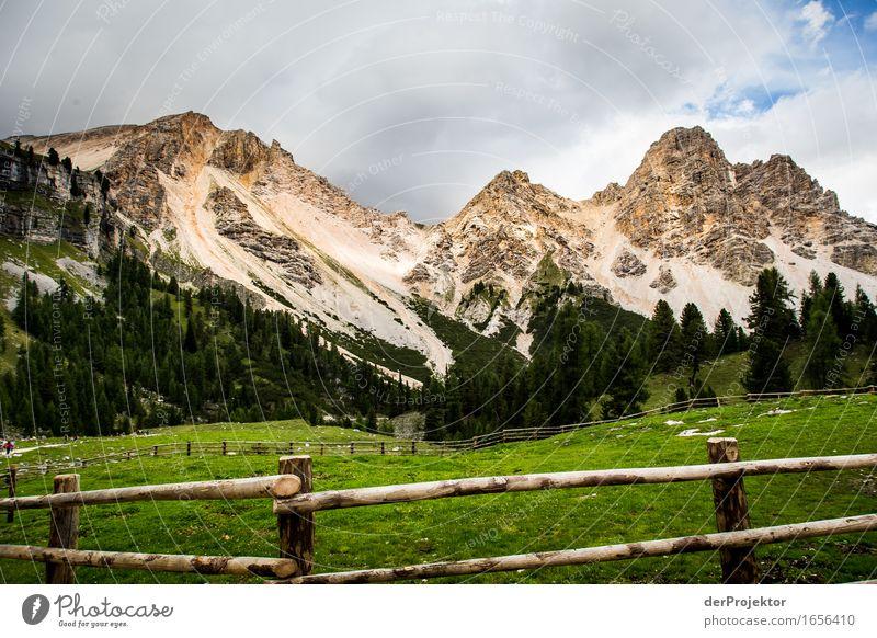 Gezäumtes Panorama Natur Ferien & Urlaub & Reisen Pflanze Landschaft Tier Ferne Berge u. Gebirge Umwelt Gefühle Wiese Freiheit Felsen Tourismus wandern Ausflug