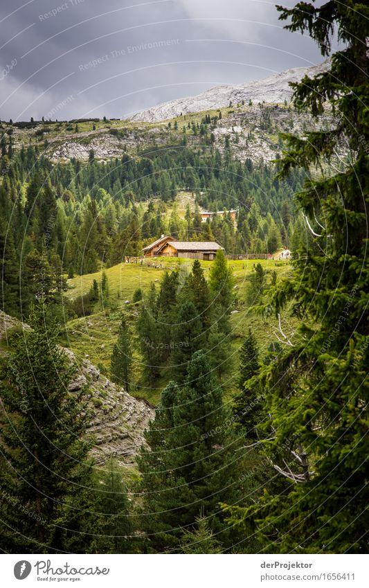 Sonnige Alm in den Dolomiten Ferien & Urlaub & Reisen Tourismus Ausflug Abenteuer Ferne Freiheit Berge u. Gebirge wandern Umwelt Natur Landschaft Pflanze Tier