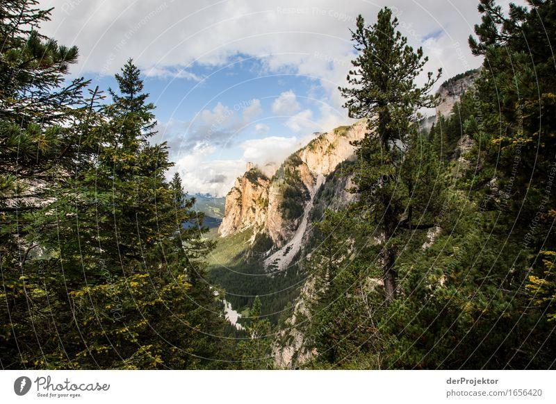 Goldene Berge Natur Ferien & Urlaub & Reisen Pflanze Sommer Baum Landschaft Tier Ferne Wald Berge u. Gebirge Umwelt Gefühle Freiheit Felsen Tourismus wandern