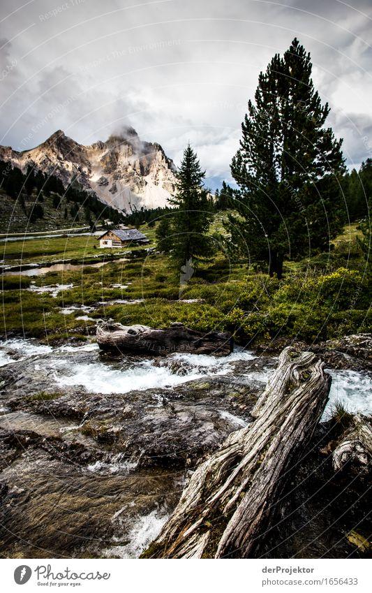 Gewitterstimmung auf der Alm Natur Ferien & Urlaub & Reisen Pflanze Sommer Landschaft Tier Freude Ferne Berge u. Gebirge Umwelt Freiheit Felsen Tourismus