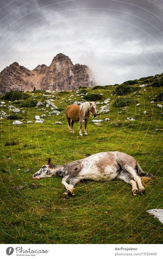 Endzeitstimmung in den Dolomiten Natur Ferien & Urlaub & Reisen Pflanze Sommer Landschaft Tier Ferne Berge u. Gebirge Umwelt Freiheit Felsen Tourismus Feld