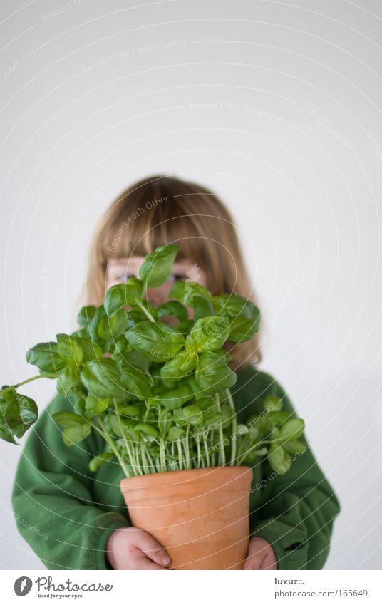 Kochen mit Spass Textfreiraum oben Freisteller Hintergrund neutral Schwache Tiefenschärfe Kräuter & Gewürze Ernährung Slowfood Klimawandel Grünpflanze
