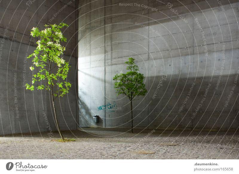 Natur Architektur Baum Pflanze Blatt Leben Tod Holz Gebäude Beton Ast leuchten Baumstamm Kies Faser