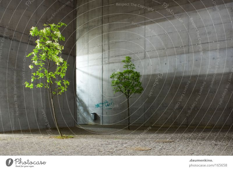 Natur Architektur Natur Baum Pflanze Blatt Leben Tod Holz Gebäude Architektur Beton Ast leuchten Baumstamm Kies Faser