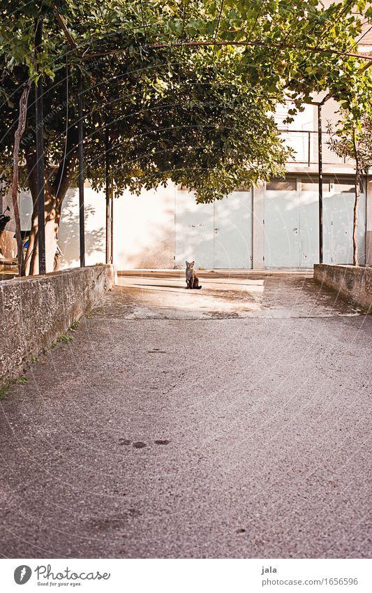 hofmauz Katze Pflanze Baum Haus Tier Gebäude Platz Schutz Bauwerk Haustier Grünpflanze