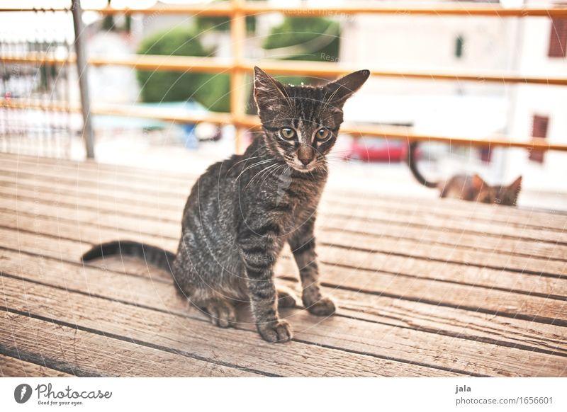 mauz Katze Tier sitzen Neugier Dorf