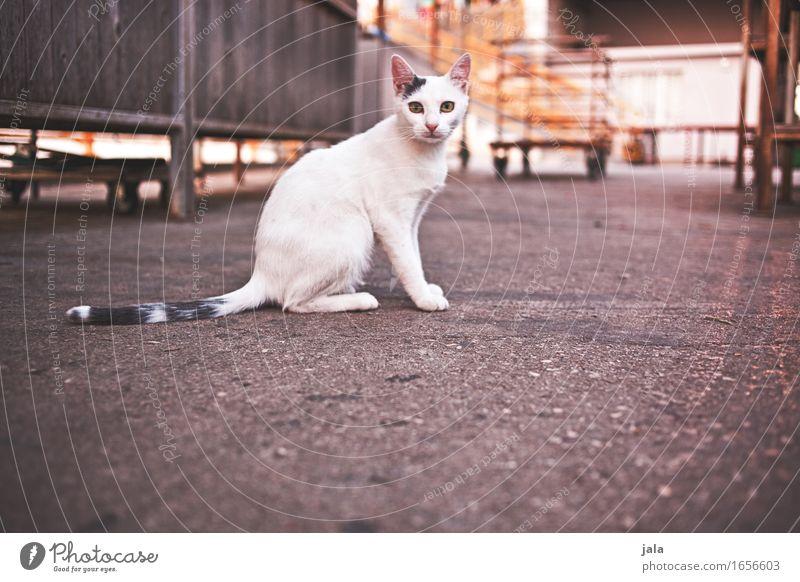 citycat Tier Haustier Katze 1 Blick sitzen ästhetisch Neugier Farbfoto Außenaufnahme Menschenleer Textfreiraum unten Dämmerung Licht Schatten Tierporträt