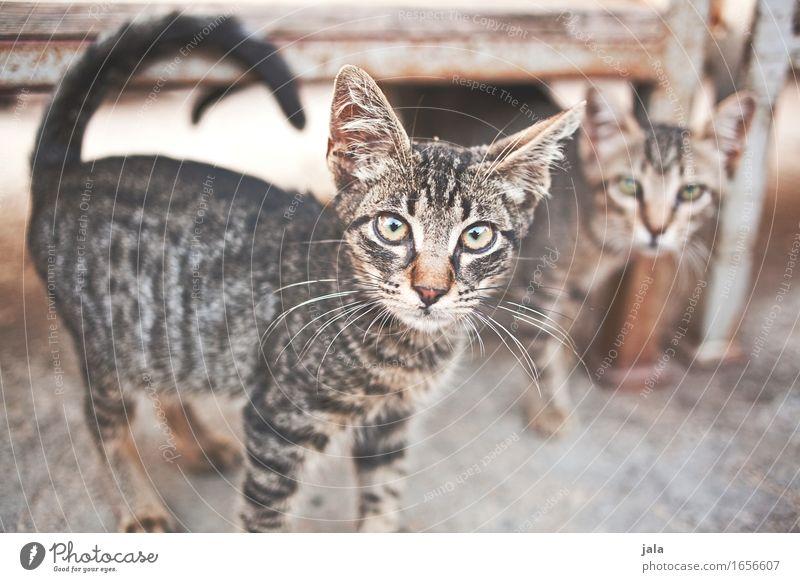 mauz & friend Katze schön Tier niedlich Neugier Haustier Interesse