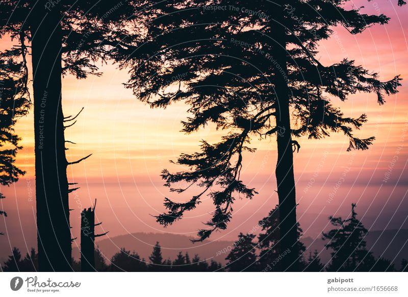 Großer Feldberg im Taunus Natur Landschaft Pflanze Himmel Nachthimmel Sonnenaufgang Sonnenuntergang Sommer Herbst Klima Wetter Schönes Wetter Baum Wald