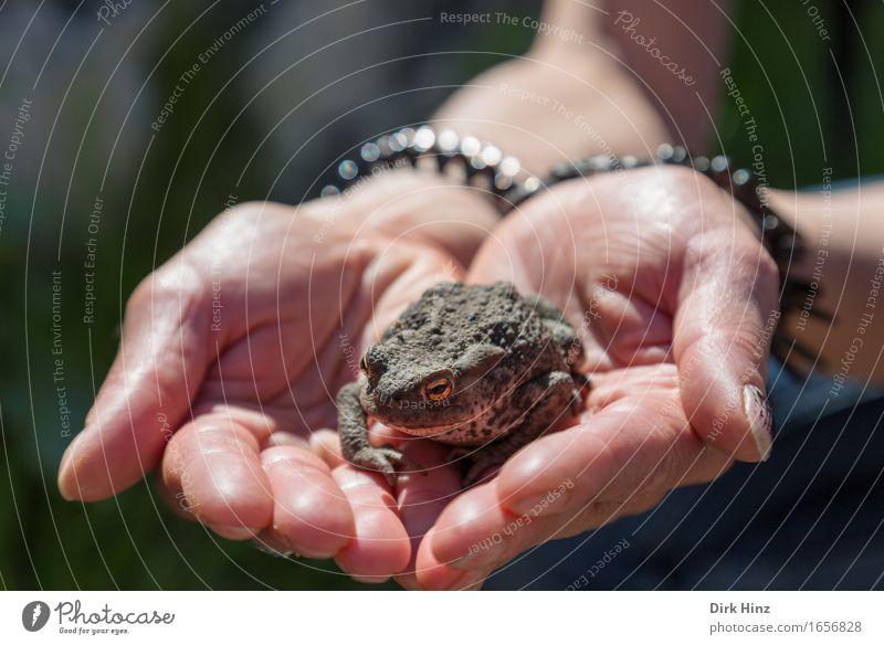 Küss mich...! Hand Frosch 1 Tier fangen außergewöhnlich Ekel wild Tierliebe Hilfsbereitschaft Angst entdecken bedrohlich Hoffnung Mittelpunkt Schutz Sicherheit