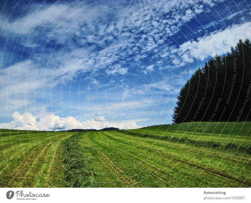 frisch-mowed-Rasen Umwelt Natur Landschaft Pflanze Erde Himmel Wolken Gewitterwolken Horizont Sonnenlicht Sommer Klima Wetter Baum Gras Wiese Wald Hügel