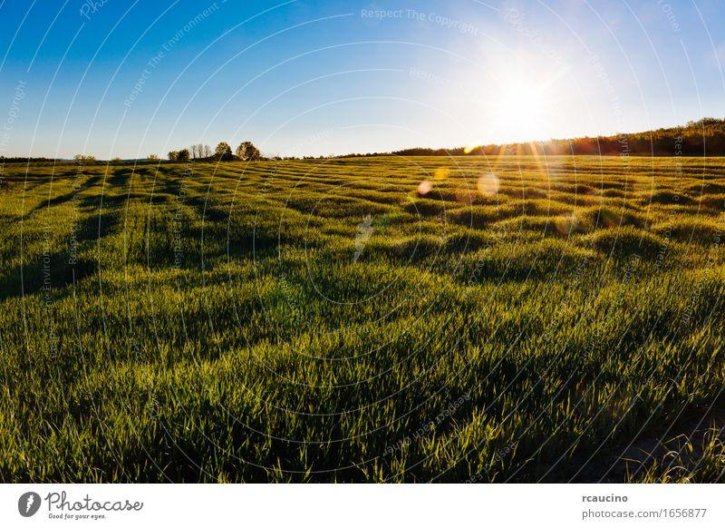 Eine Graswiese am frühen Morgen mit Sonnenstrahlen. Natur Pflanze Sommer grün Farbe Blatt Wiese Garten hell Regen Wachstum frisch nass Kräuter & Gewürze Rasen