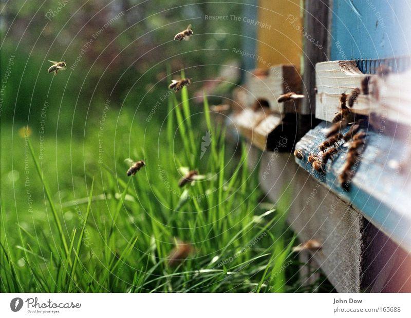 Treffpunkt Bienenstock blau grün Pflanze Sommer Wiese Frühling Holz fliegen Arbeit & Erwerbstätigkeit Verkehr Schönes Wetter Kommunizieren Biene Halm Schwarm klug