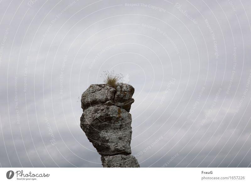 überwacht- für immer... Ferien & Urlaub & Reisen Sommer Gras Felsen Stein beobachten stehen hoch grau Wachsamkeit Überwachung Kalkstein Raukar Schweden Gotland