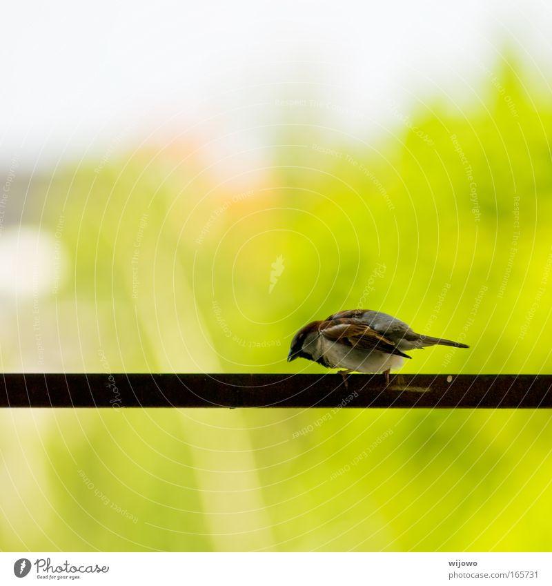 Höhenangst grün Tier gelb Freiheit hell Vogel fliegen natürlich Wildtier frei Fröhlichkeit Flügel Neugier fallen füttern hocken