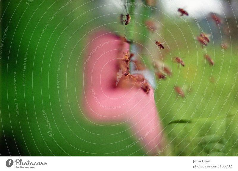 Bienen! Immen! Sumseriche! Natur grün Sommer Arbeit & Erwerbstätigkeit Gras Bewegung Frühling Holz rosa fliegen Aktion Insekt Biene Kiste hören Schwarm