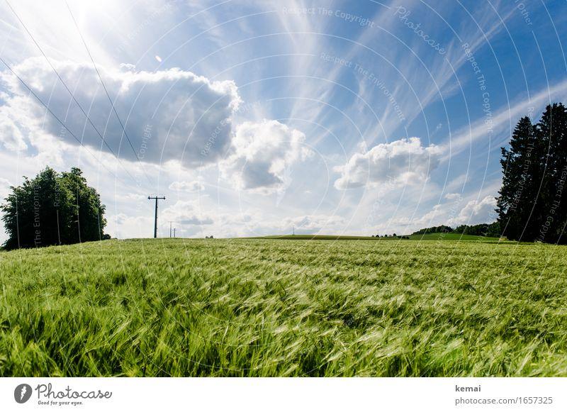 AST9 | Das Feld am Wegesrand Himmel Natur Pflanze blau Sommer schön grün Landschaft Wolken Umwelt Wärme Wachstum authentisch Schönes Wetter Landwirtschaft