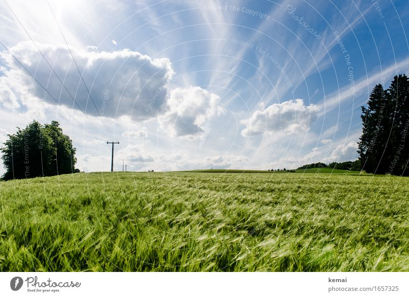 AST9 | Das Feld am Wegesrand Umwelt Natur Landschaft Pflanze Himmel Wolken Sonnenlicht Sommer Schönes Wetter Wärme Nutzpflanze Gerstenfeld Kornfeld Weizenfeld