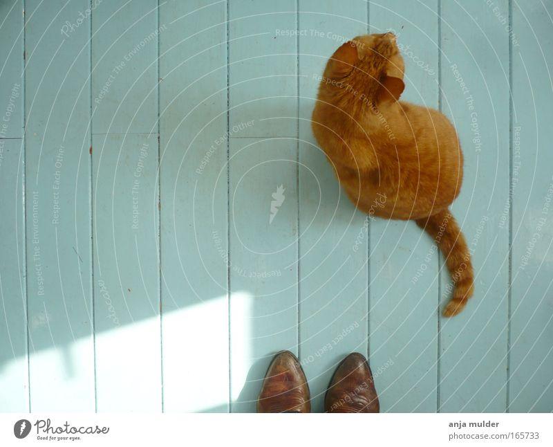 weiß blau ruhig Tier Holz Traurigkeit Katze Schuhe Stimmung Zusammensein warten ästhetisch authentisch Frieden einfach Häusliches Leben