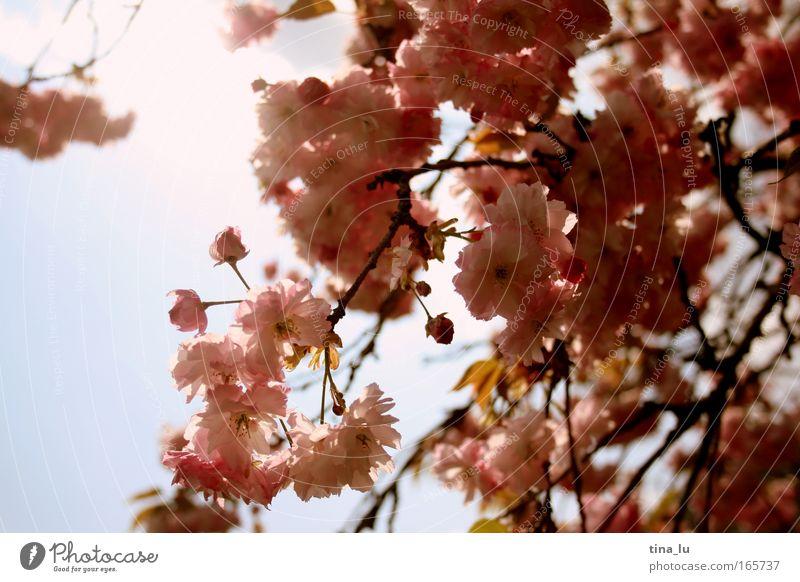 stadtpark-romantik Natur Pflanze Sommer Farbe Erholung Leben Gefühle Blüte Stimmung Park Fröhlichkeit