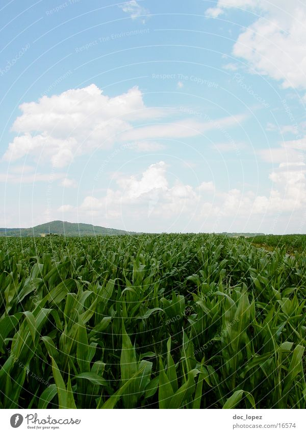 Der hinter den Reihen wandelt Himmel grün blau Wolken Ferne Berge u. Gebirge Landschaft Feld Horizont Landwirtschaft Flur Mais Baden-Württemberg Inka Azteken