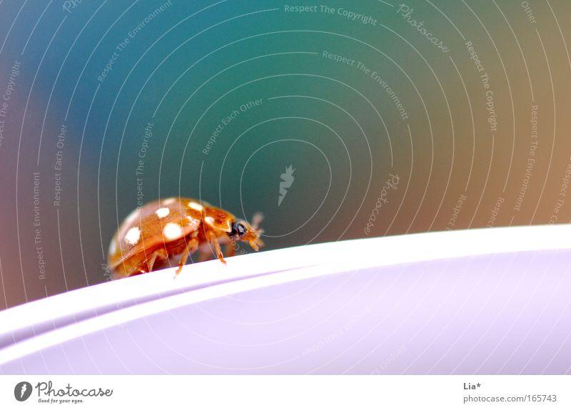 Lesezeichen II Tier Farbe klein Fröhlichkeit Insekt Punkt niedlich Käfer krabbeln Plage winzig