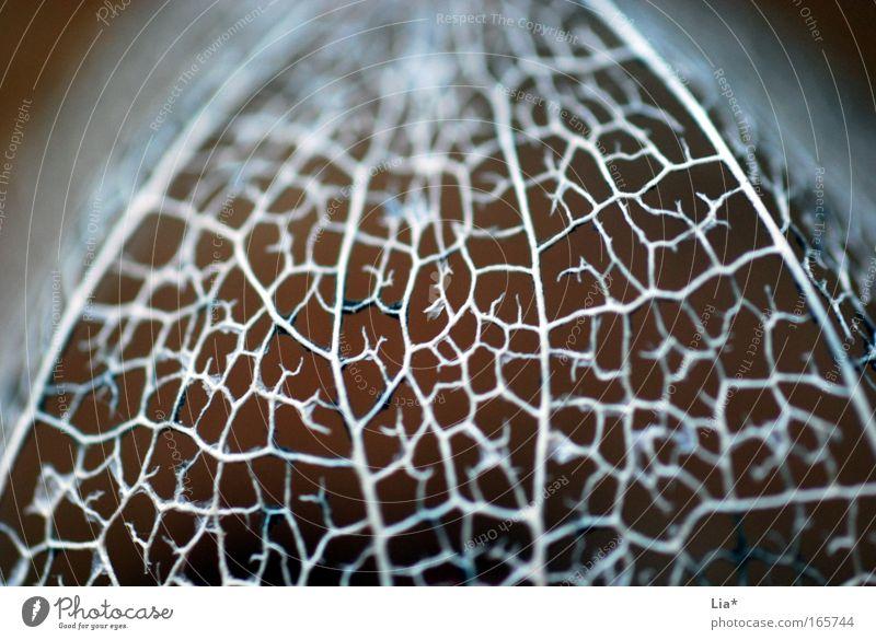 made from silver Pflanze Blatt Blüte glänzend Dekoration & Verzierung silber Gedanke Vernetzung Gehirn u. Nerven zerbrechlich Kostbarkeit Physalis