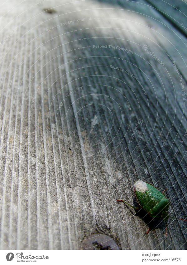 die_kleine_wanze grün Holz Perspektive Insekt krabbeln Holzfußboden Wanze