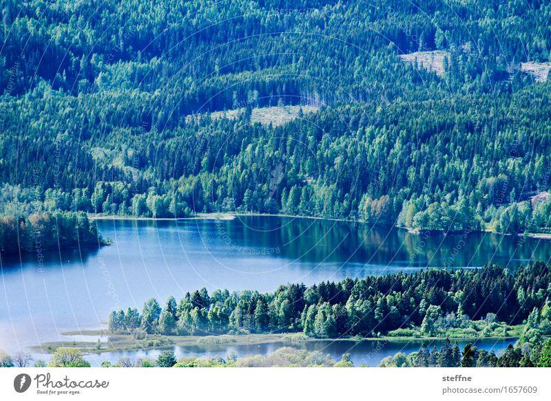 Oslo Natur Landschaft Frühling Sommer Schönes Wetter Wald Berge u. Gebirge Seeufer Idylle Norwegen holmenkollen Farbfoto Außenaufnahme