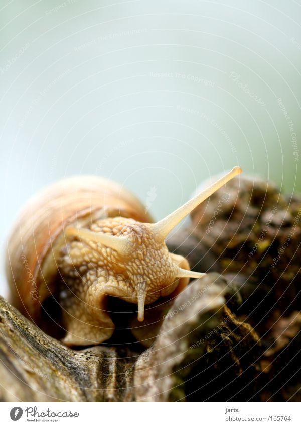 schhhh... Tier Denken Park braun Wildtier natürlich Schnecke schleimig
