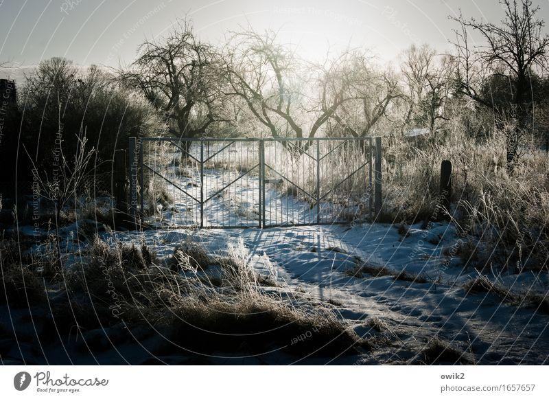 Wintergarten Natur Baum Landschaft ruhig kalt Umwelt Garten hell Horizont glänzend Eis leuchten Idylle Sträucher Schönes Wetter