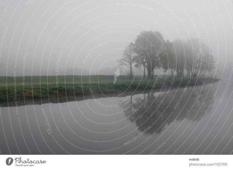 flussnebel Farbfoto Außenaufnahme Menschenleer Morgen Landschaft Nebel Baum Gras Flussufer grau grün Stimmung ruhig Traurigkeit
