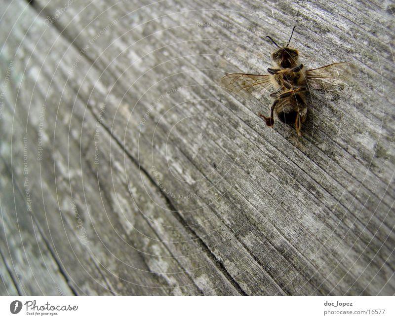 die_kleine_maja Tod Holz Perspektive Insekt Biene Holzfußboden Maja