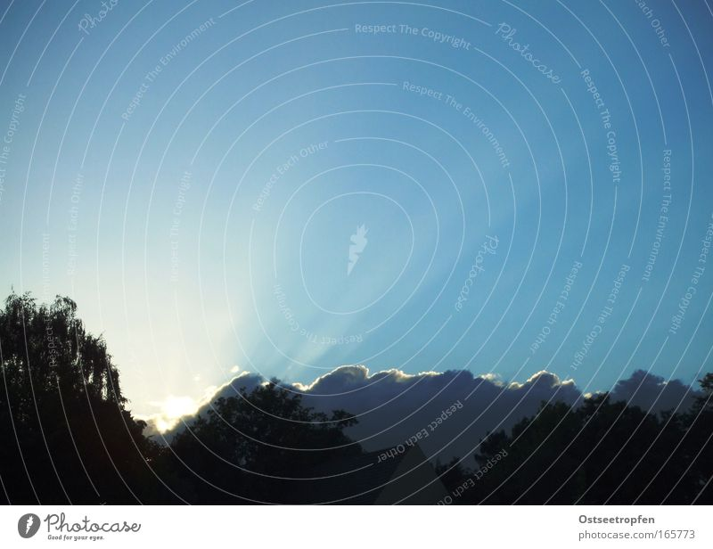 F-Himmel Natur blau Pflanze Sonne Wolken Wald Landschaft Luft Beleuchtung entdecken Baumkrone Blauer Himmel strahlend Wolkenhimmel Wolkenformation
