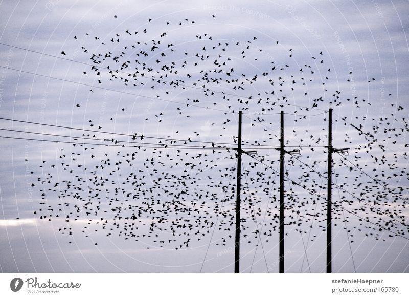 Some birds Himmel Wolken Tier Freiheit Vogel Zufriedenheit Zusammensein fliegen frei Perspektive Flügel Gesellschaft (Soziologie) Lebensfreude Geborgenheit